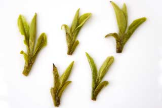 brewed tea leaves of No 43 longjing