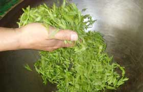 longjing tea pan frying process