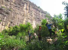 plucking wuyi cliff tea