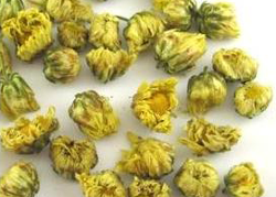 chrysanthemum-buds.png